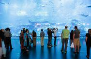 Stock Photo of view of dubai aquarium inside dubai mall