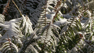 Stock Video Footage of Hoh Rain Forest, Winter, Snow, Olympic National Park