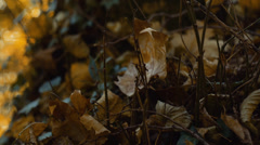 Dry leaves in forest Stock Footage