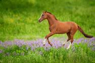 Stock Photo of horse on green meadow