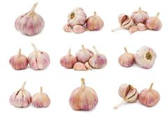 Garlic Stock Illustration