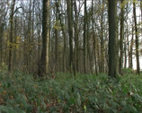 Stock Video Footage of English Woodland