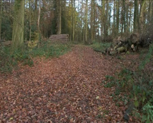 Woodland Track Stock Footage