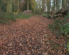 Leaf Covered Woodland Track Stock Footage