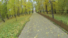 Park alley among trees with colorful foliage and fallen leaves Stock Footage