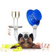 New years eve dog Stock Illustration