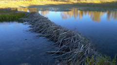 RIVER – BEAVER DAM Stock Footage