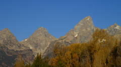 MOUNT TETON AND FALL TREES (CLOSE UP) Stock Footage