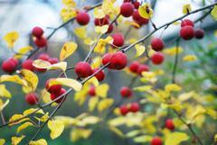 apple-tree - stock photo