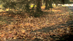Electric Leaf Blower with Autumn Leaves Stock Footage