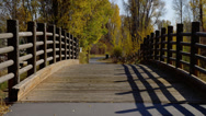 SMALL WOODEN BRIDGE WITH FALL TREES Stock Footage