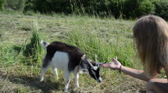 girl sits in meadow goatling scratch snout - stock footage