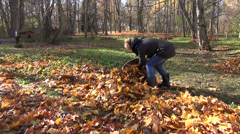 Woman handles leaves in cloth bag autumn garden work Stock Footage