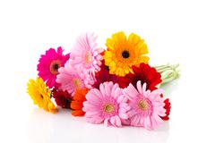 Stock Photo of bouquet colorful gerber flowers