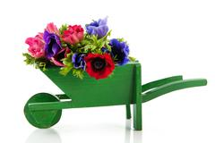 Stock Photo of bouquet anemones in wheel barrow