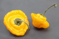 Stock Photo of Bishop's Crown yellow Chilli