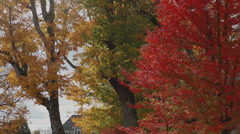 Colorful trees in town center (1 of 2) Stock Footage