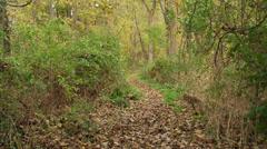 Man walking on Appalachian trail (2 of 3) - stock footage