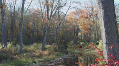 Small autumn pond (4 of 7) Stock Footage