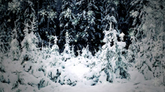 Winter landscape in forest Stock Footage