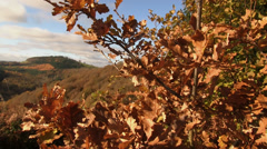 Autumn landscape at Mortimer Forest, Shropshire, England Stock Footage