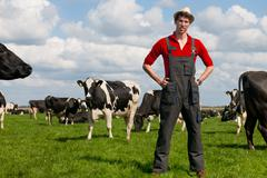 farmer in field with cows - stock photo