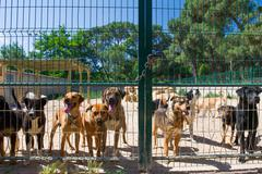 Dog shelter in spain Stock Photos