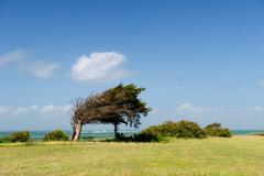 Landscape with windy tree Stock Photos
