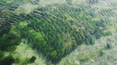 Clean water ocean Stock Footage