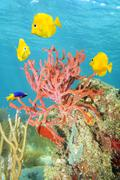 Rope sponge and colorful tropical fish Stock Photos