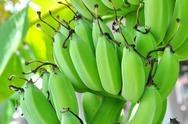Stock Photo of green banana