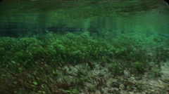 Green bottom of underwater plants in the clear river.mp4 Stock Footage