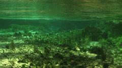 Underwater environment Stock Footage