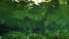 Underwater river environment Stock Footage