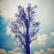 Silhouette of the tree with blue sky with retro filter effect Stock Photos