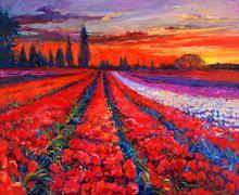 Poppy fields Stock Illustration