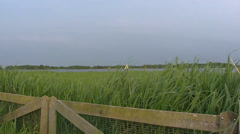 Reed land + zoom in small sailing boat on Dutch peat lake Stock Footage