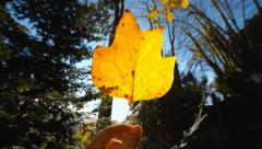 Autumn leaf on a hand Stock Footage