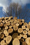 Stack of sawn tree trunks Stock Photos