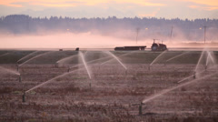 Dawn Mist, Richmond Cranberry Field Stock Footage