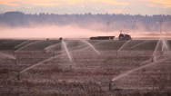 Stock Video Footage of Dawn Mist, Richmond Cranberry Field