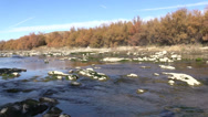 Stock Video Footage of Flowing River in Fall