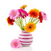 Gerber flowers in striped vase Stock Photos
