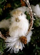bird on a limb ornament - stock photo