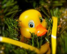 Rubber ducky ornament Stock Photos