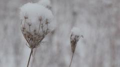 Winter Field Stock Footage