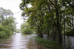 flooding with trees in water - stock photo
