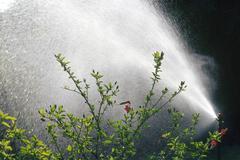 Water sprinkler spraying water - stock photo