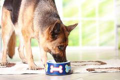 dog eating from bowl - stock photo