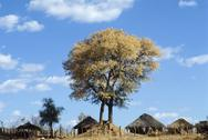 Stock Photo of Africa, Zimbabwe: huts in a village